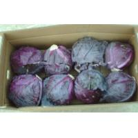 China Round Purple Fresh Chinese Napa Cabbage on sale