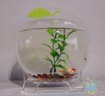 Quality Plastic modern acrylic fish tank for sale