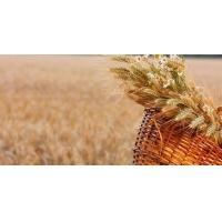Quality Hydrolysed Wheat Gluten for sale