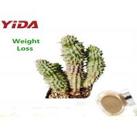 Quality Brown Yellow Natural Weight Loss Powder Herbal Hoodia Cactus Plant Extracted for sale