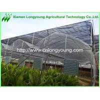 Quality large plastic tunnel greenhouse for sale