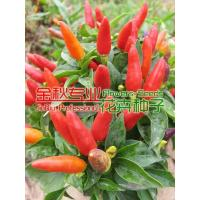 Quality Watch Fruit vegetables for sale