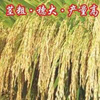 Hybrid Rice Xieyou 5968 for sale