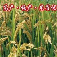 Hybrid Rice Xiuyou No.5 for sale