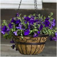 Quality CobraCo Scroll Braided Style Hanging Basket for sale