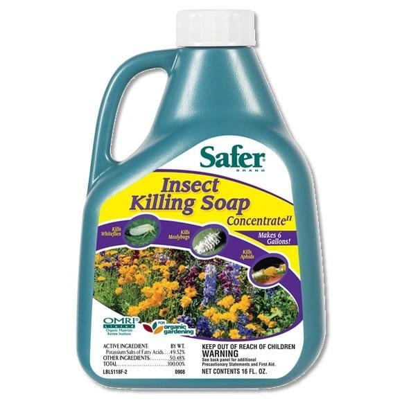 Buy Safer Brand Insect Killing Soap, 16 oz. Concentrate at wholesale prices