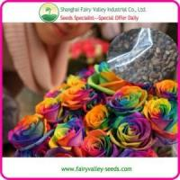 Rose Flower Seeds Rainbow Rose Seeds All colors For Growing