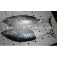 Quality Frozen Fish Bonito Tuna for sale