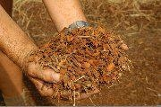 Buy Fine and Coarse Mulch at wholesale prices
