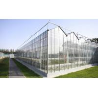 Venlo Glass Greenhouse