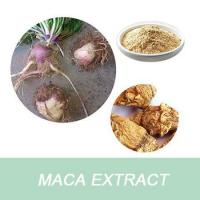Quality Best selling Maca Extract Powder/Maca root extract for sale