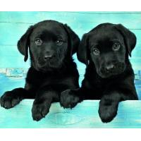 Quality 5B81 Two Black Labradors (for 6 cards) for sale
