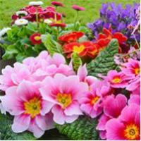 Buy cheap Plants Plants & Flowers from wholesalers