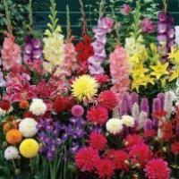 Buy cheap Plants Miscellaneous Bulbs from wholesalers
