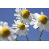 Buy cheap Aromatic waters Chamomile essential water from wholesalers