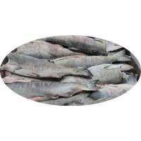 Buy cheap Salmon HG Oncorhynchus Keta from wholesalers
