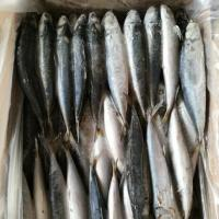 Buy cheap Horse mackerel from wholesalers