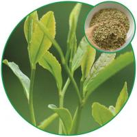 Senna Leaf Granules Tea, Chinese Herbal Tea Antibiotic and Lowing the Blood Pressure